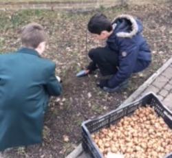 Planting Bulbs at Little Reddings School