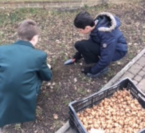 Planting Bulbs at Little Reddings School