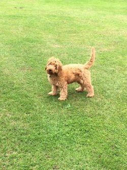 The newest member of Bushey Meads School – Introducing Bonnie