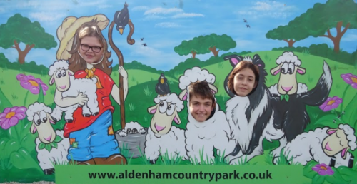 Lambing season at Aldenham Country Park